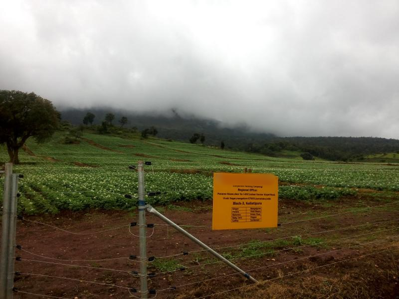 Agriculture Company Investment Opportunity in Chikmagalur, India