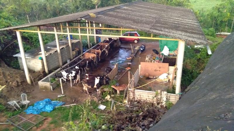Profitable Dairy Farms Business Investment Opportunity in Daramasthala, India