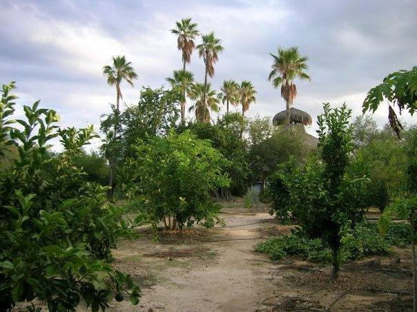 Forest Nursery Business Assets for Sale in Baja California Sur, Mexico