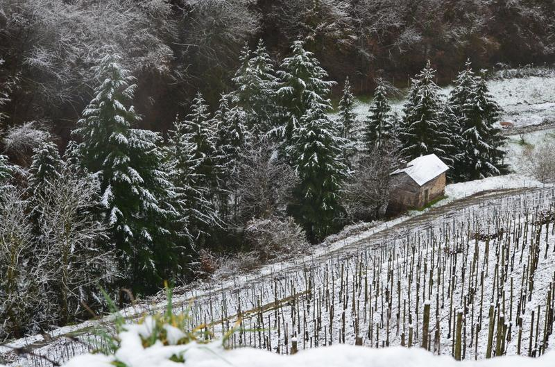 Profitable Winery Investment Opportunity in Cochem, Germany