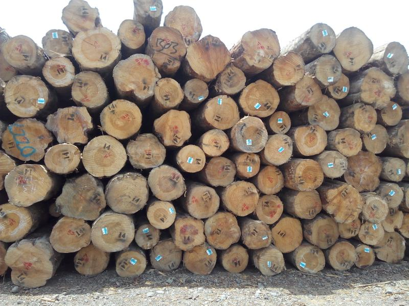 Timber Tract Operations Company for Sale in Gandhidham, India