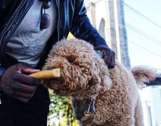 Durham based company offers high-quality and premium dog chews made from yak & cow milk.