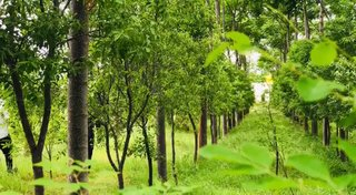 Company plans to manage agriculture crop plantation that includes sandalwood and cluster of fruits.