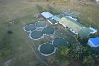 For Sale: 400 hectares land having 7 poultry houses Tilapia ponds, aquaculture hatchery.