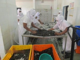 Processing and exporting of Japanese delicacy Shijimi Clams, with more than 10 clients.