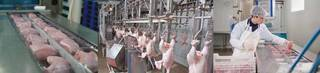ISO 22000 certified meat processing unit working with a large number of retailers.