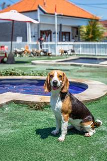 For Sale: Dog daycare and boarding facility with constant growth located in Bali.